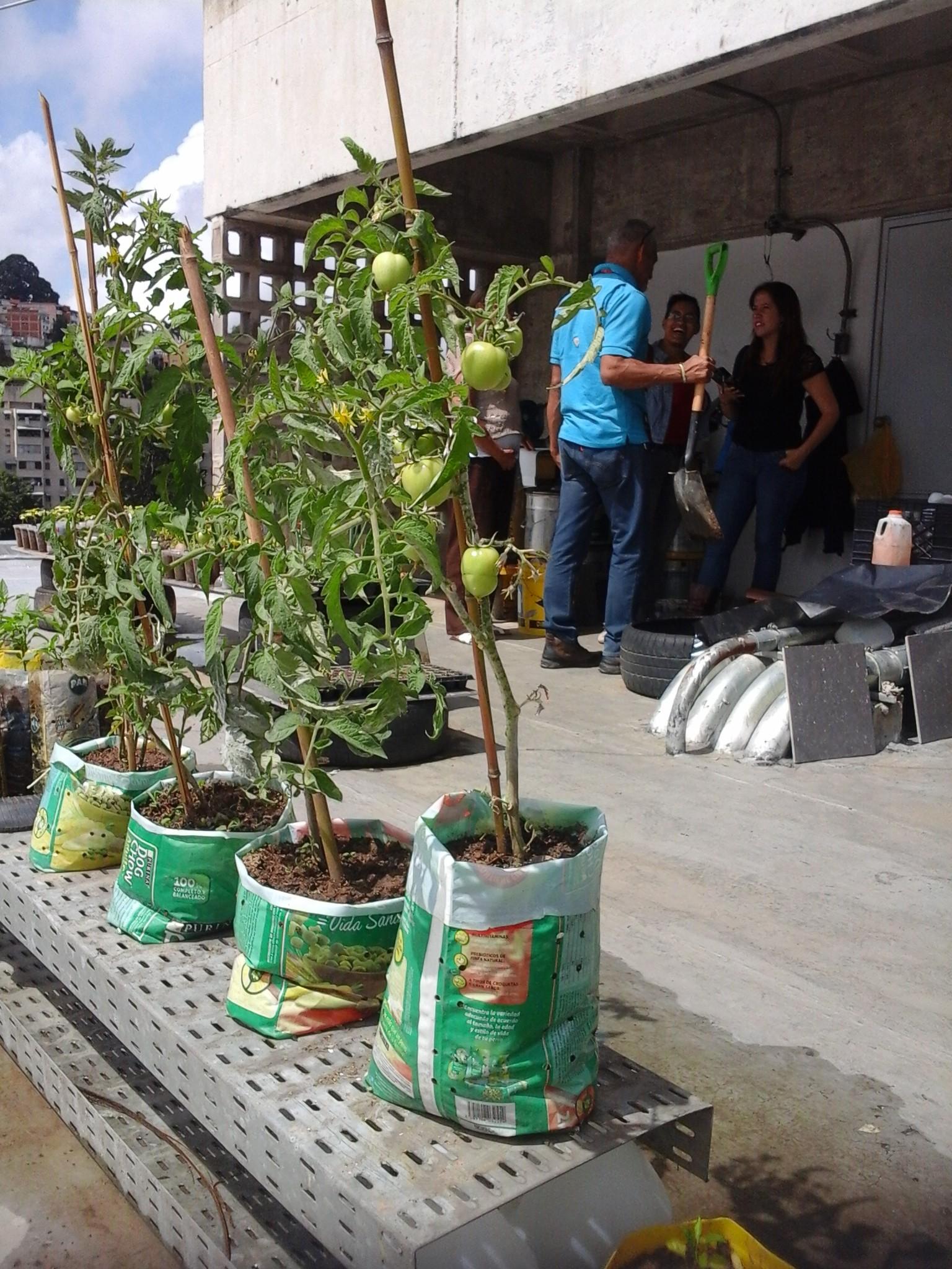 Avanzan los talleres de formación de agricultura urbana en Metro Los Teques